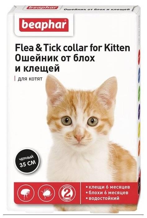 Ошейники от блох и клещей для кошек: как действует, сколько стоит, виды