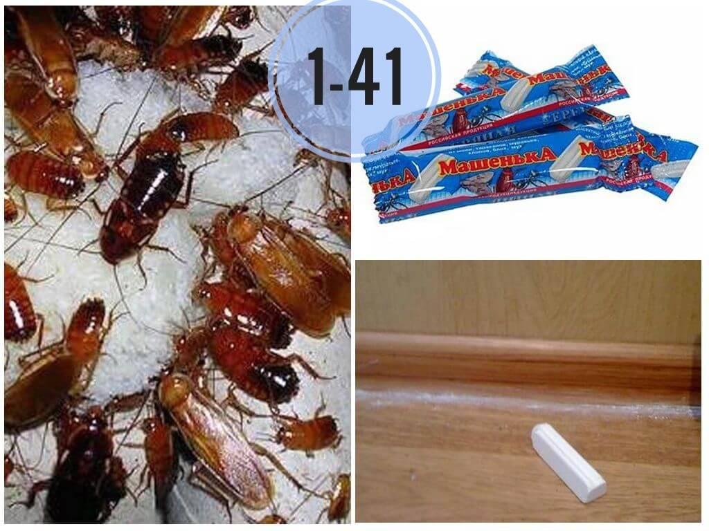 Мелок машенька от муравьев - отзывы и инструкция