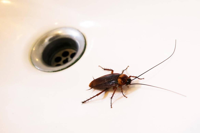 3 службы для жалоб, если от соседей ползут тараканы. как защититься?