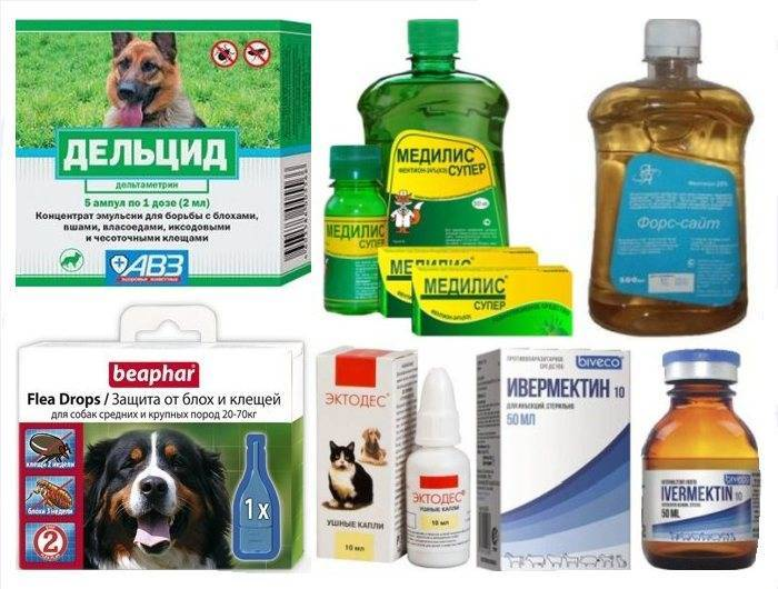 Выбираем лучшее средство от блох для собак: спреи, капли, шампуни и ошейники