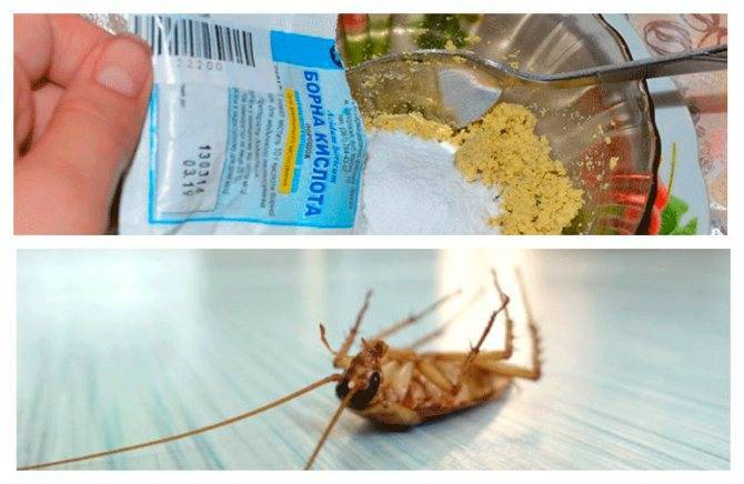 Как действует борная кислота на тараканов: рецепт с яйцом и другие
