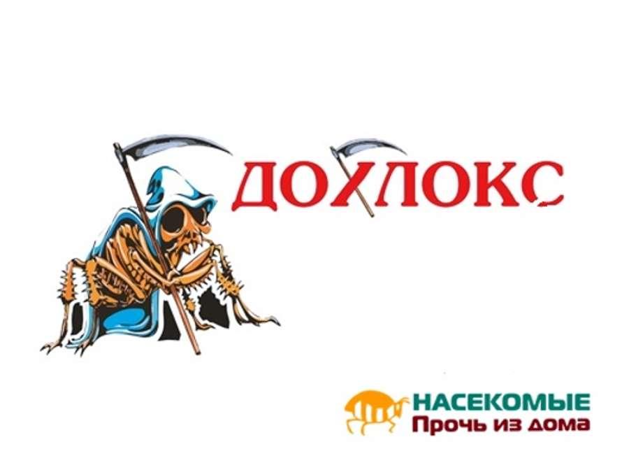 Обзор геля против тараканов дохлокс