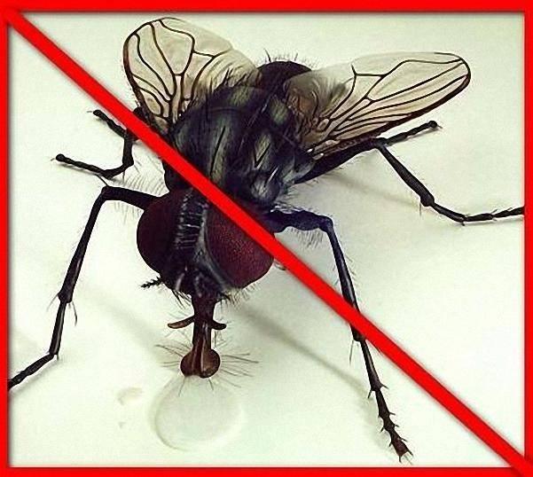 Как убить муху – читайте!