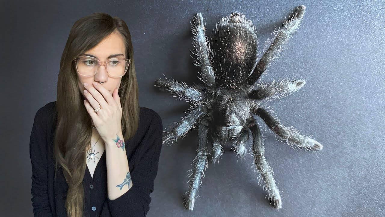 Как называется боязнь пауков и как перестать их бояться?