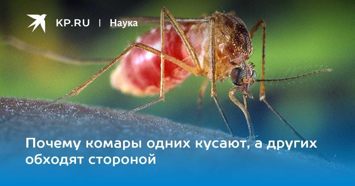 Почему комары кусают не всех людей