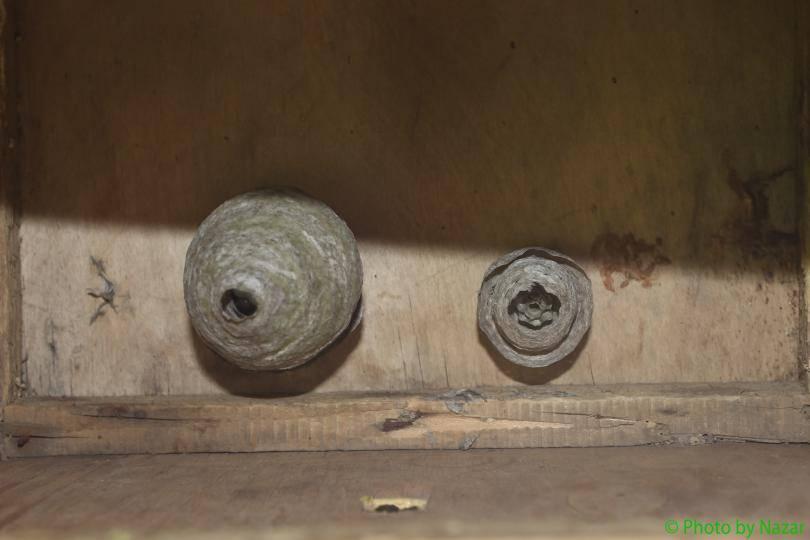 Осы: как избавиться на балконе от гнезда