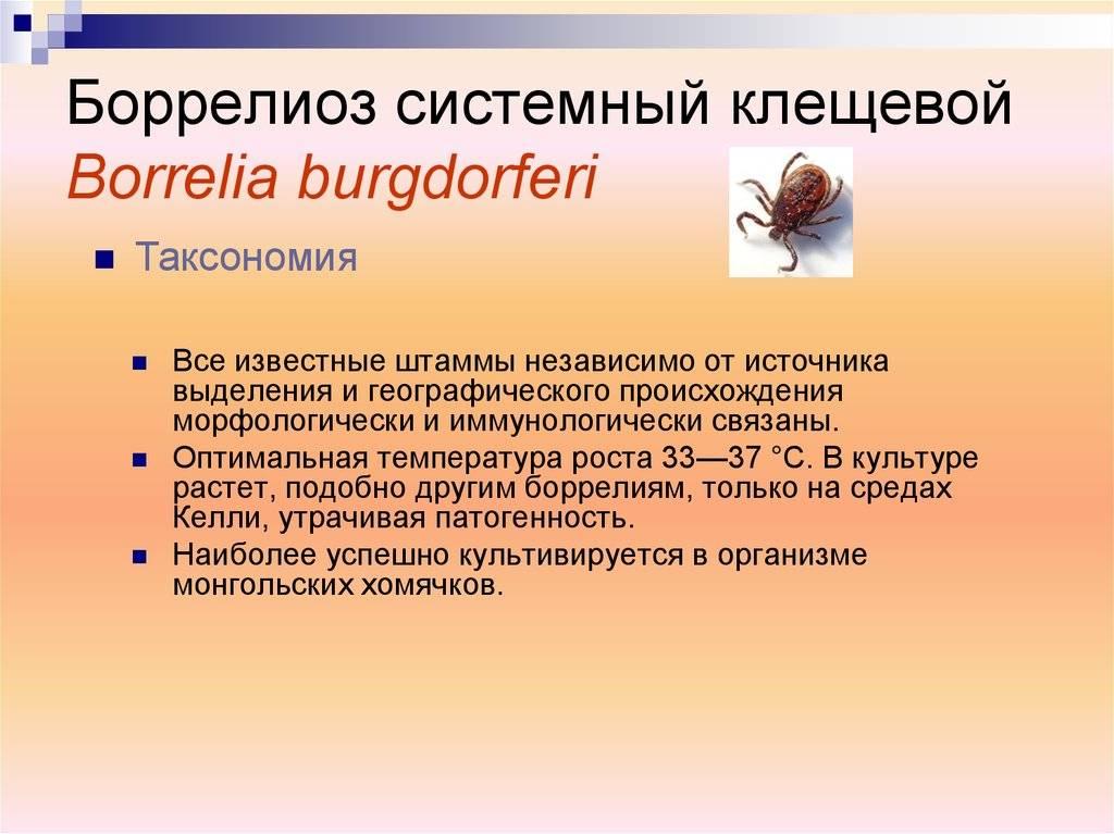 Боррелиоз у человека: что это, симптомы, фото и последствия
