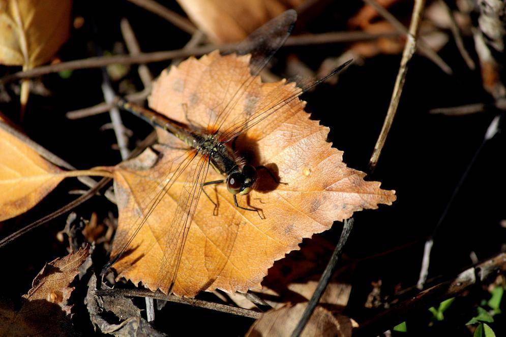 Где зимуют осы, если осенью их гнезда пустеют?