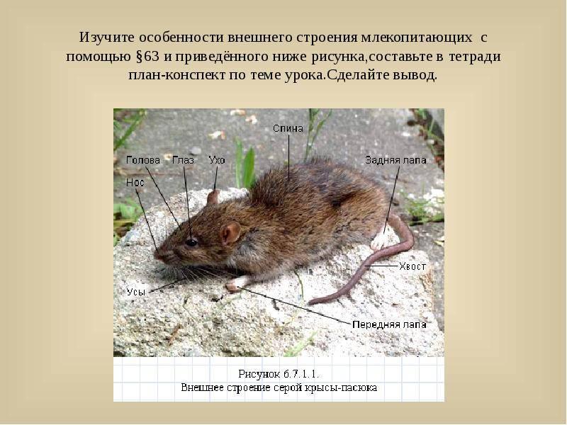 Что такое мышь и как она устроена