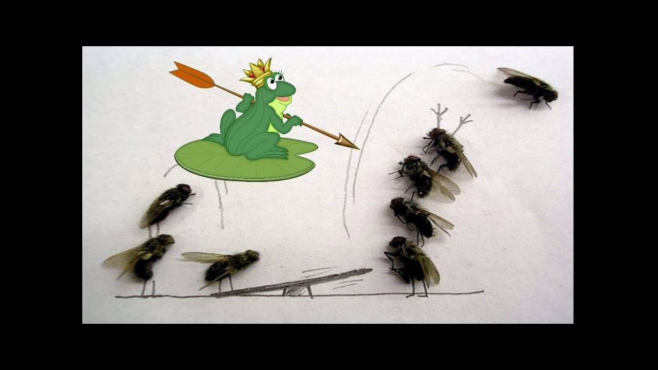 Ловушка для мух: виды, как сделать своими руками и поймать насекомое