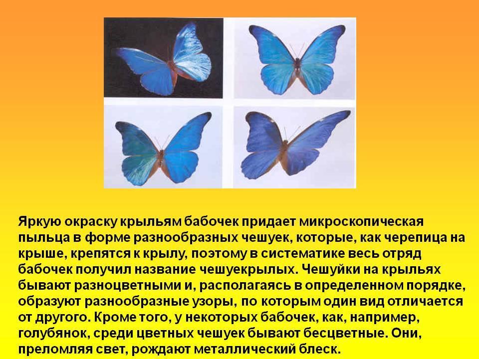 Протез бабочка на один зуб – цена 2021, из какого материала лучше