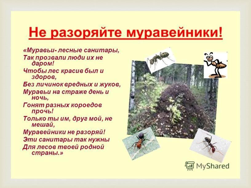 Муравьи на участке : польза и вред? / асиенда.ру