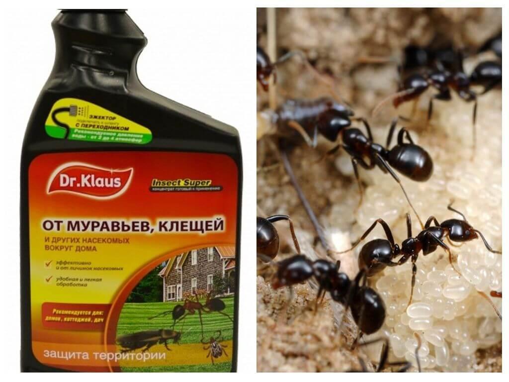 Как избавиться от клещей за хх дней (эксперимент с муравьями) | клуб любителей муравьев