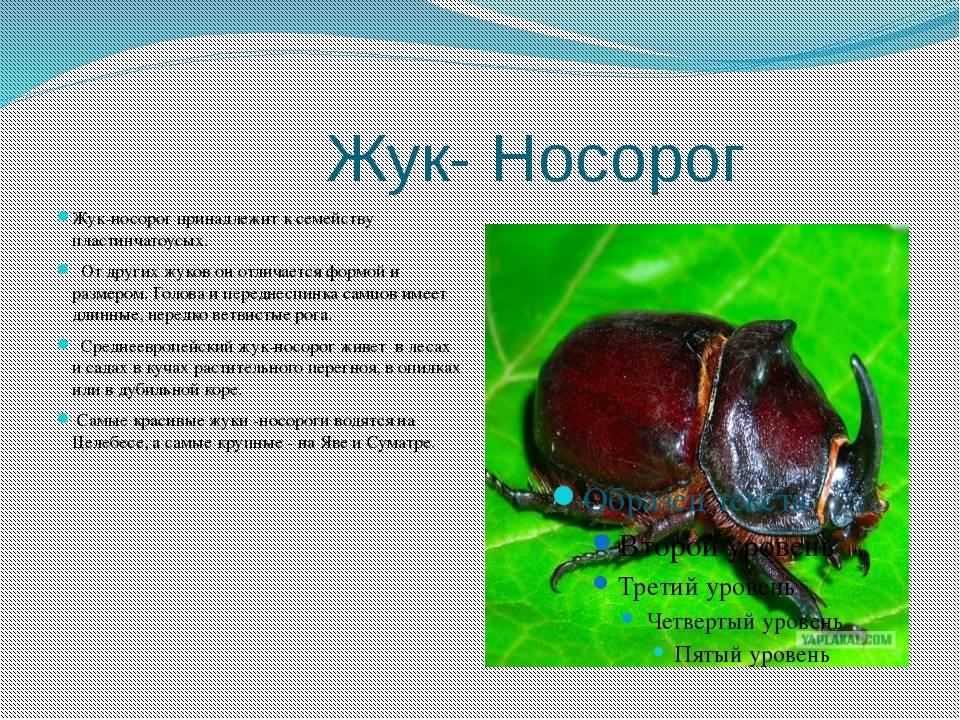 Жук усач – образ жизни, опасность и способы выведения жука дровосека с длинными усами
