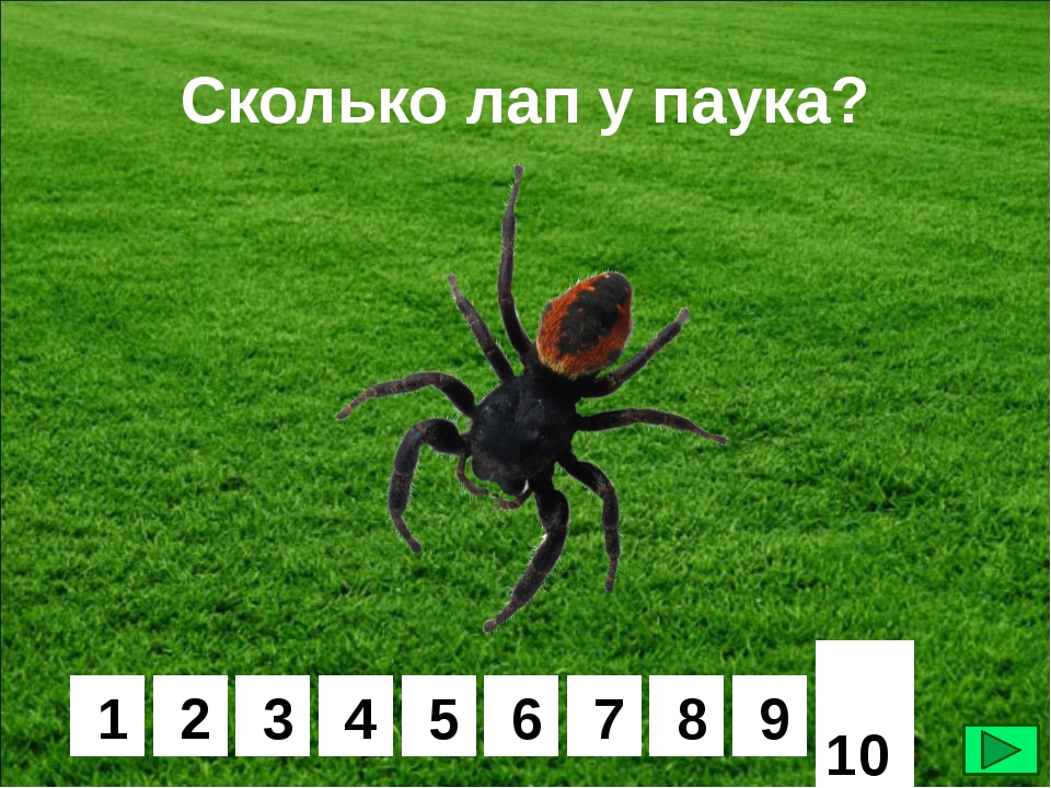 Сколько лап у паука или самые занимательные факты про существ, живущих в паутине