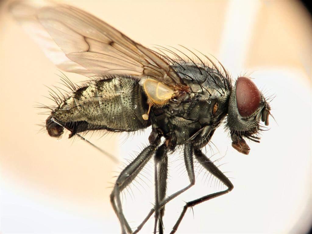Если кусают мухи