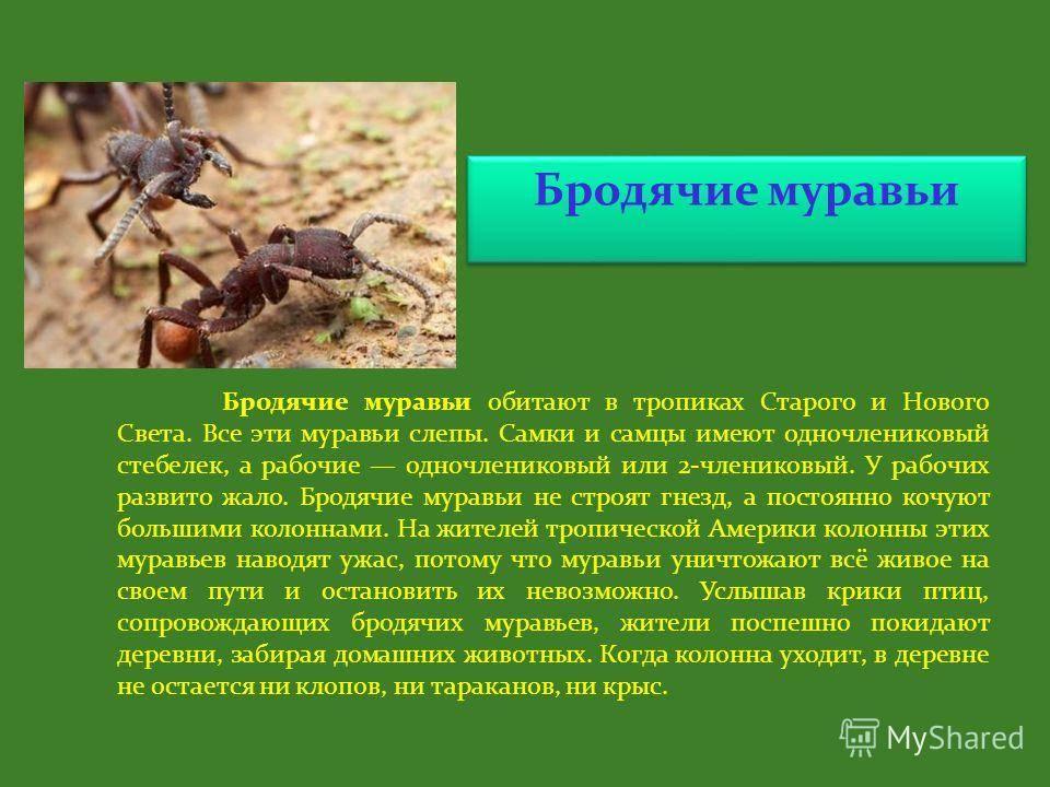 Сколько живет муравей: с чем связана продолжительность жизни