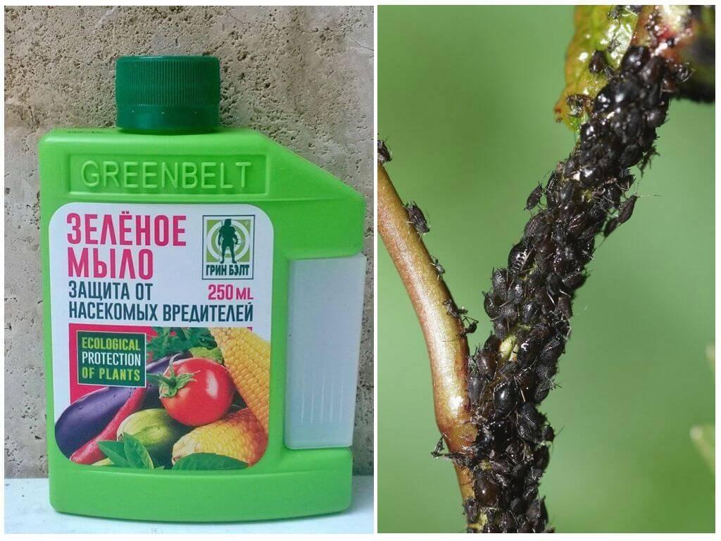 Зеленое мыло от вредителей: инструкция, для чего применять