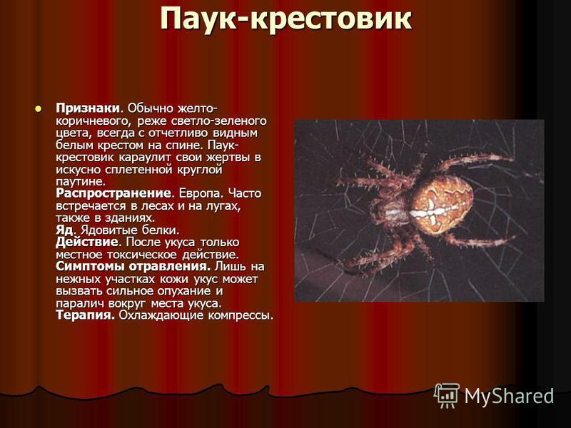 Паук крестовик – фото, описание, ареал, питание, размножение