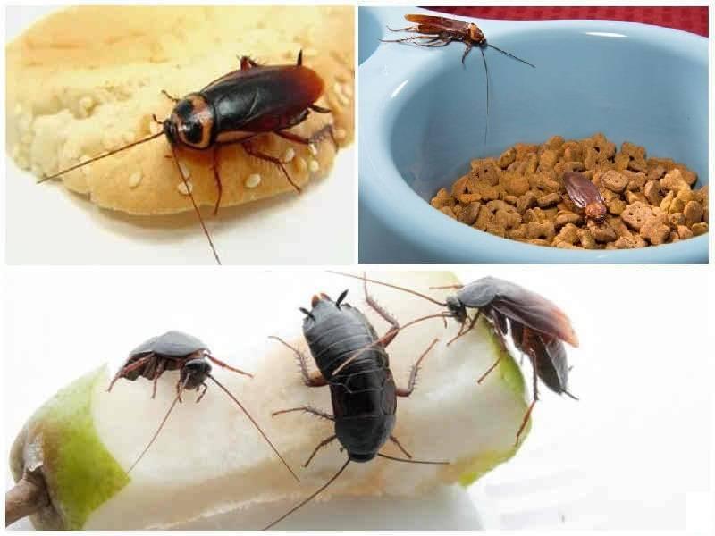 Инструкция как избавиться от тараканов в общежитии