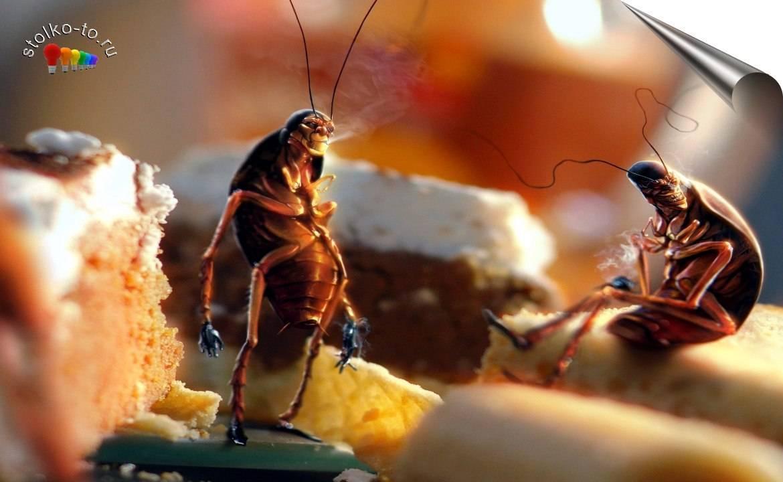 Опасны ли тараканы для человека и какой вред здоровью они могут нанести