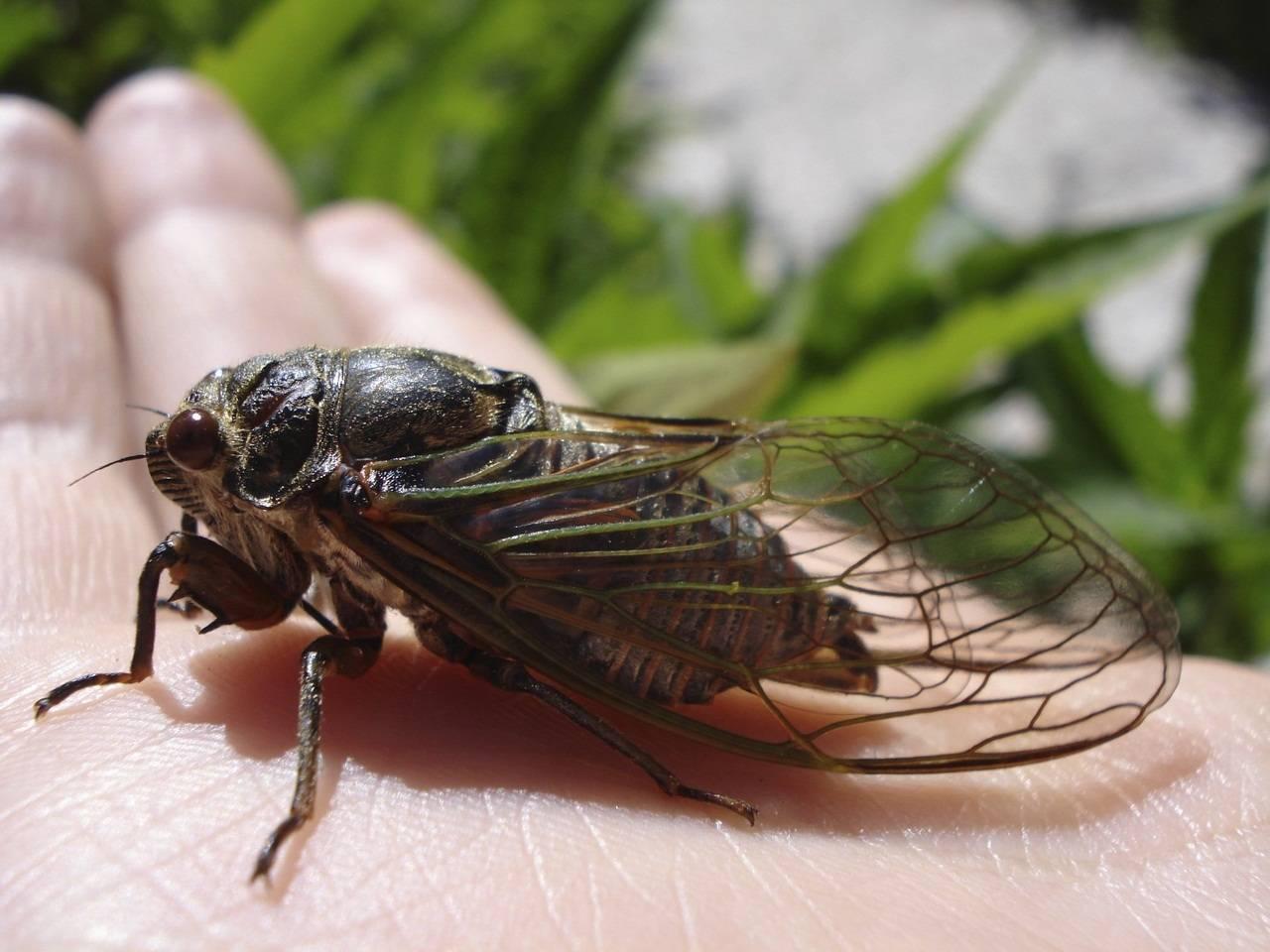 Скорость мухи в полёте: какая максимальная и для чего мухам большая скорость?