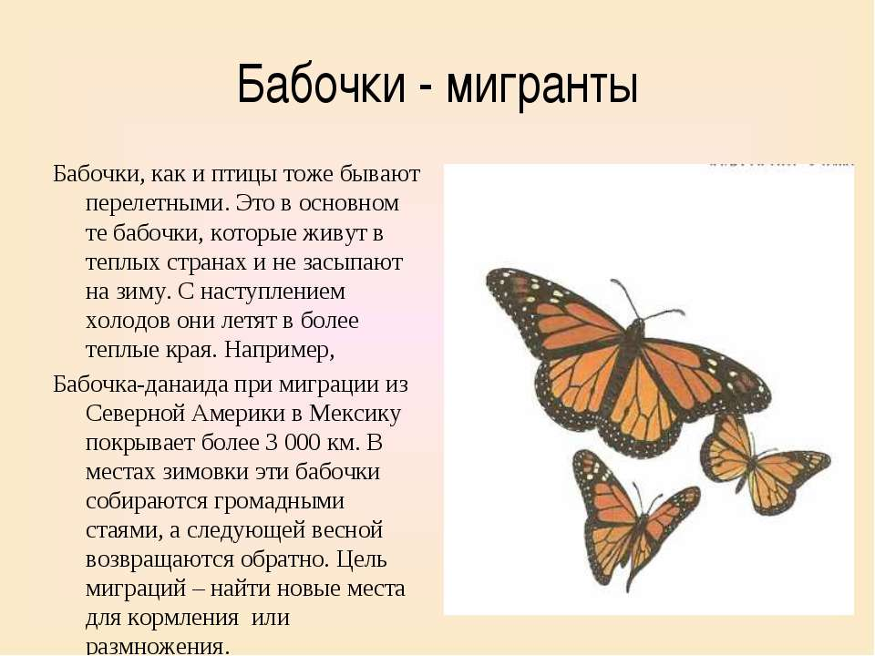 Бабочки — польза или вред