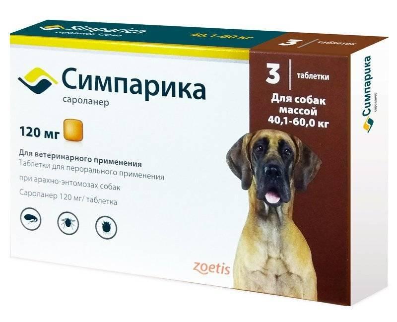 Препараты для собак от блох и клещей - что лучше выбрать?