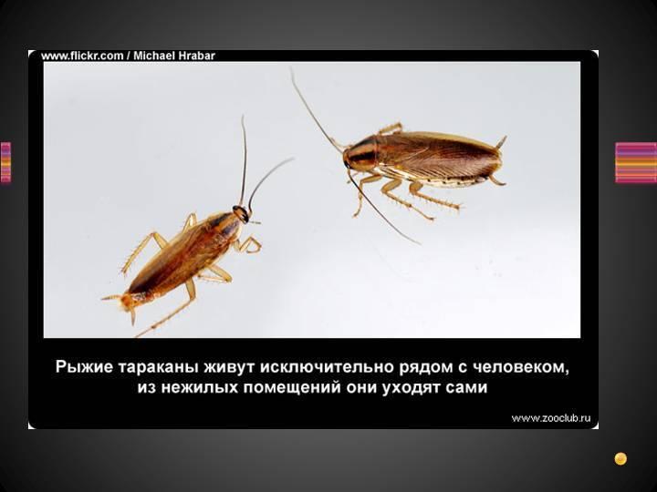 Интересные факты о тараканах и их скорости