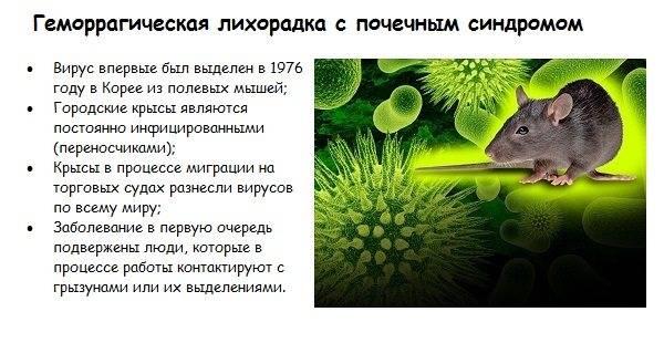 Последствия мышиной лихорадки для здоровья | плюсы и минусы