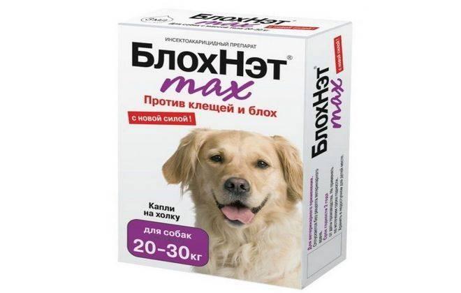 Блохи у собаки – как вывести и чем лечить? - статьи о ветеринарии «свой доктор»