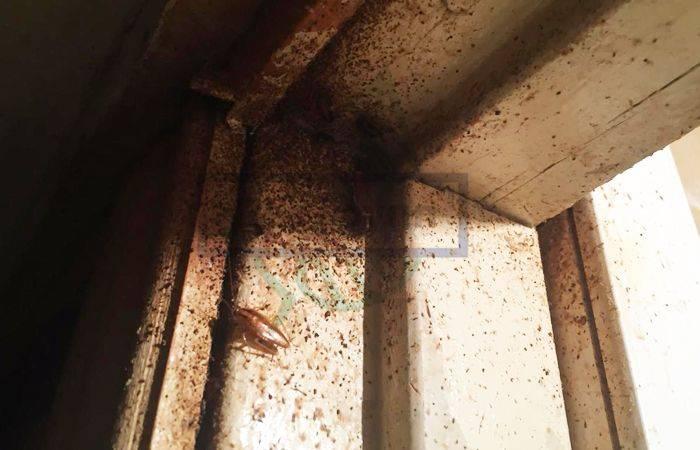 Тараканы ползут от соседей, что делать и куда обращаться