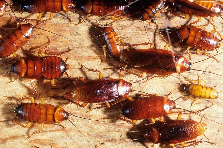 Где живут тараканы в доме, и как найти их гнездо