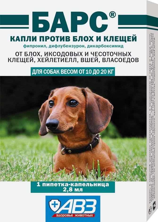 Капли для собак от блох и клещей: виды капель, преимущества и недостатки, дозировка, правила обработки