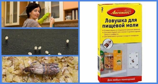 Как быстро избавиться от пищевой моли: 5 эффективных домашних способов