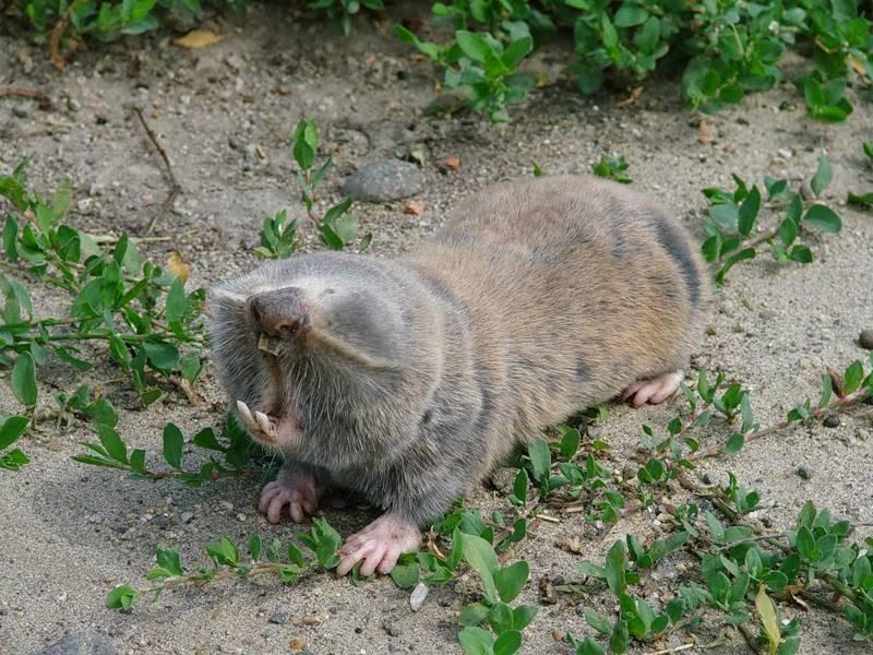 Земляная крыса: дневник пользователя nochka le