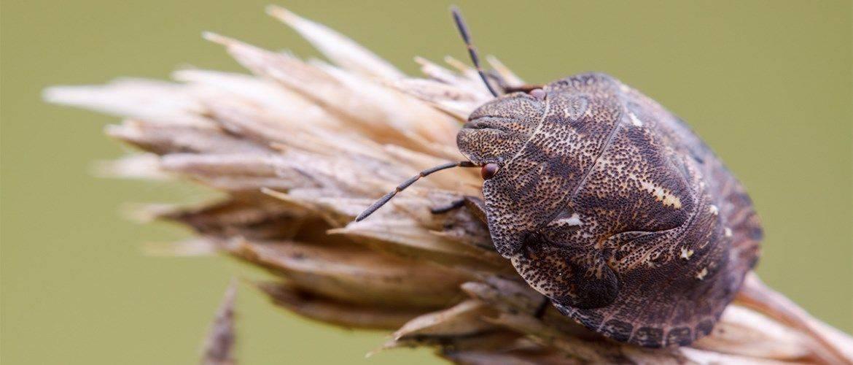 Чего боятся постельные клопы: чем их травить, народные средства для этого, уничтожение домашних клопов холодом или запахами трав