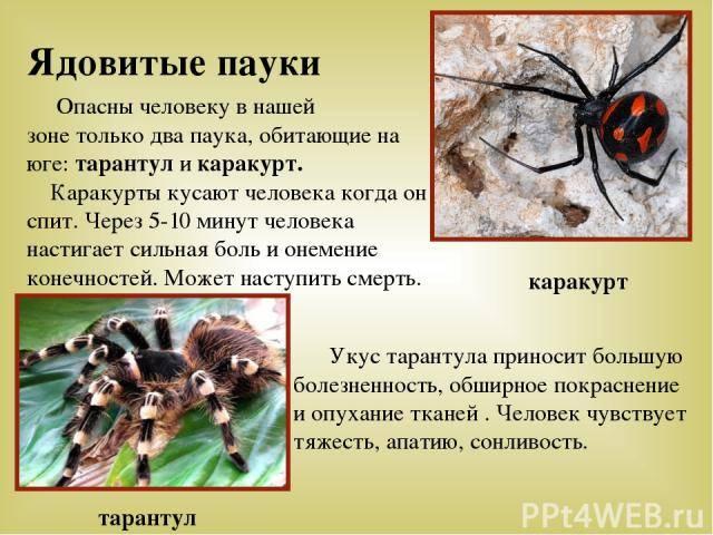 Укус тарантула: фото, опасен ли для человека, как выглядят симптомы, последствия, первая помощь