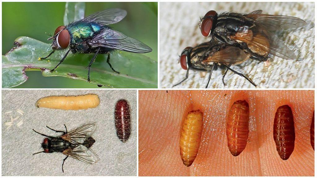 Сколько глаз у мухи, как видит муха
