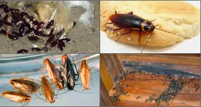 Как избавиться от тараканов в холодильнике