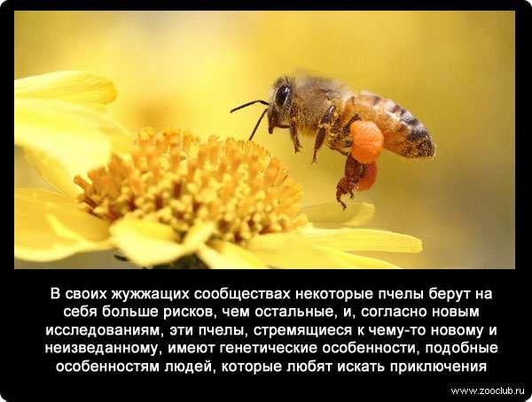 Интересные факты о пчелах. отношение к ним и чем выделяются