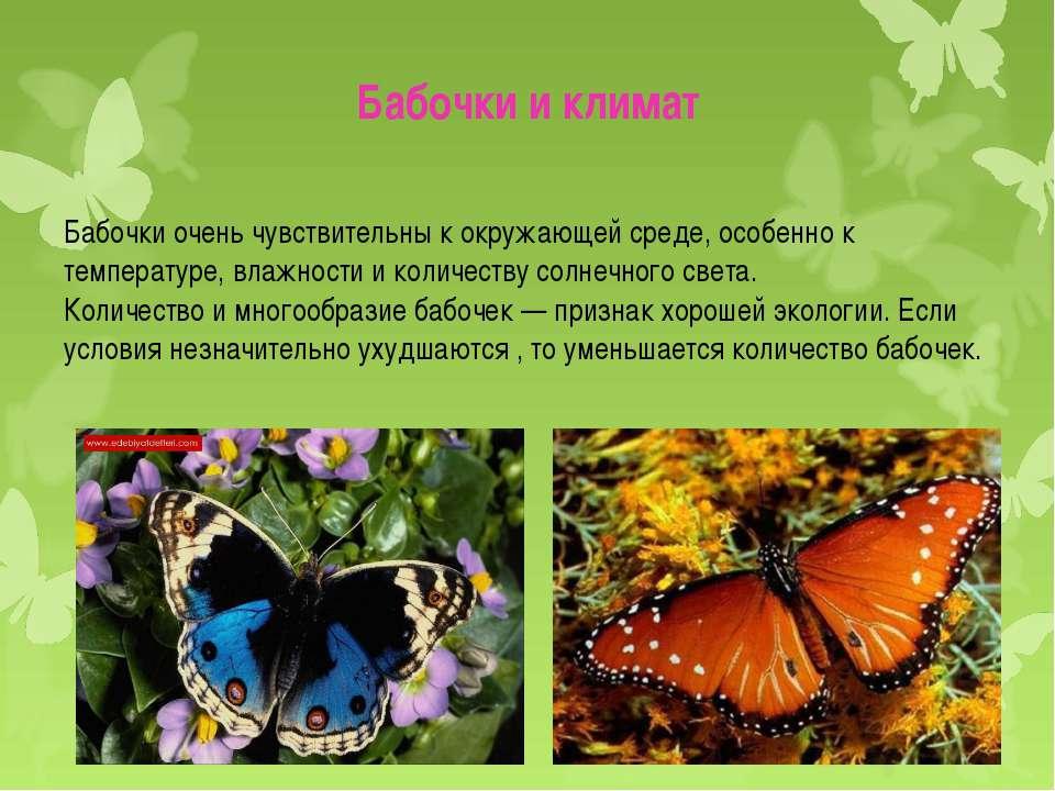 """Презентация на тему: """"презентация. как появляется бабочка. этапы развития."""". скачать бесплатно и без регистрации."""