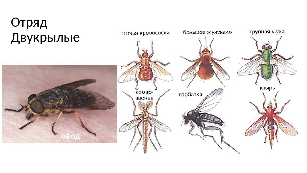 Половая система насекомых