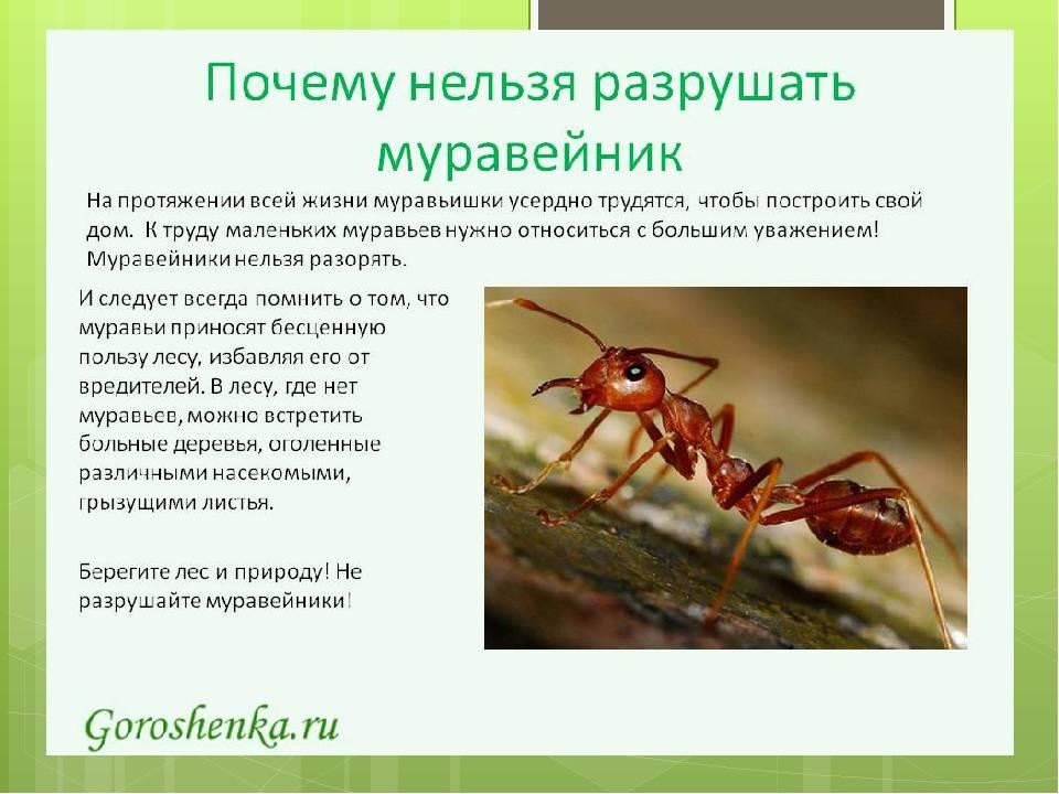 Строение муравейника