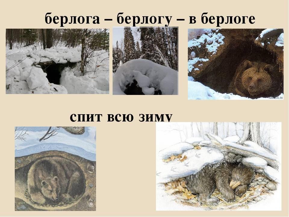 Топ 5 животных впадающих в спячку зимой