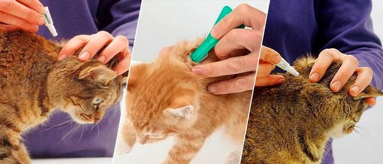 Можно ли капать кормящей кошке капли от блох