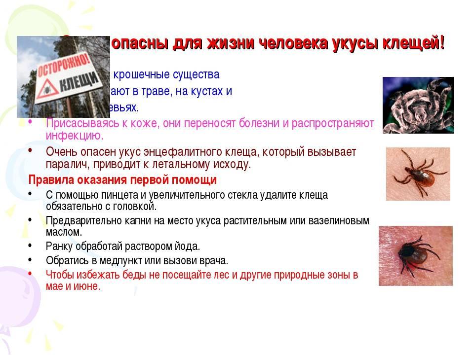 Клещи: меры безопасности и первая помощь при укусе