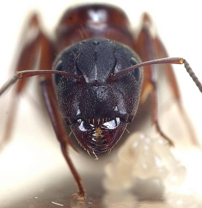 Чем отпугнуть муравьев