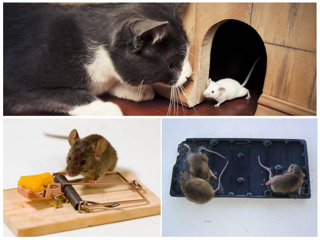 Средство от мышей в доме, как сделать чтобы они ушли навсегда?