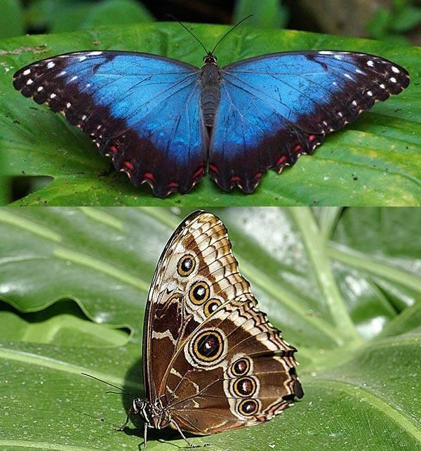 Рейтинг самых красивых бабочек в мире с картинками